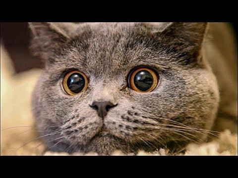 Gatos Chistosos Gatitos Chistosos Videos Graciosos 3